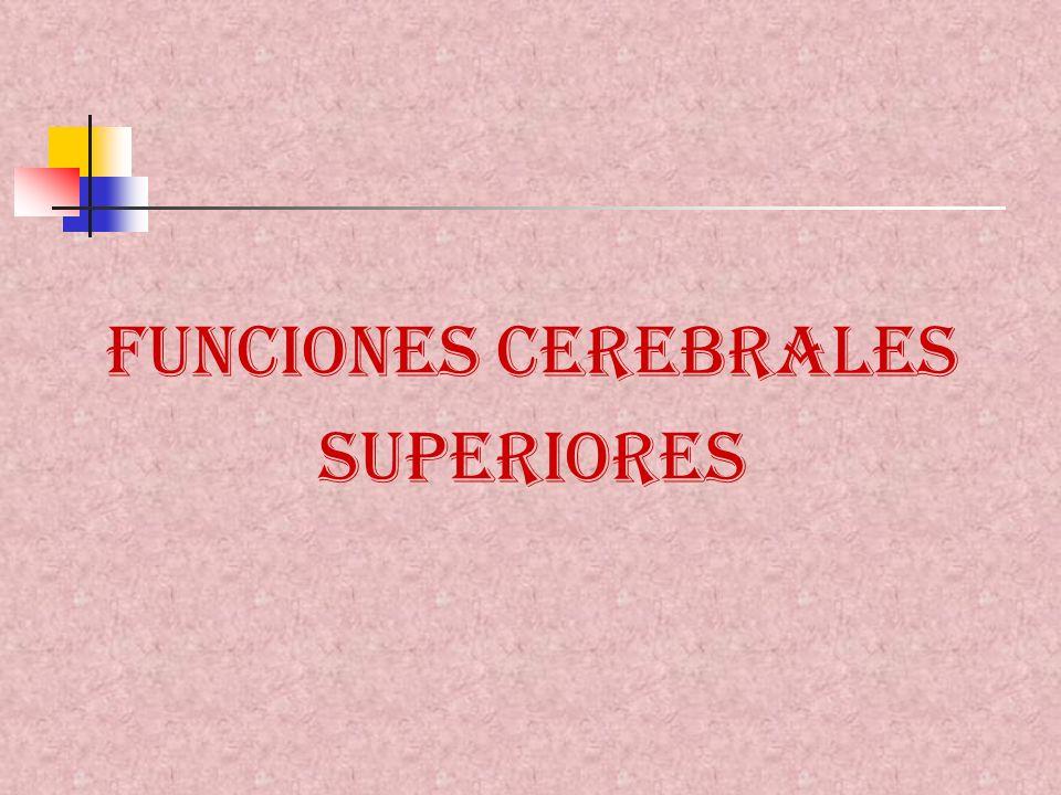 FUNCIONES CEREBRALES SUPERIORES