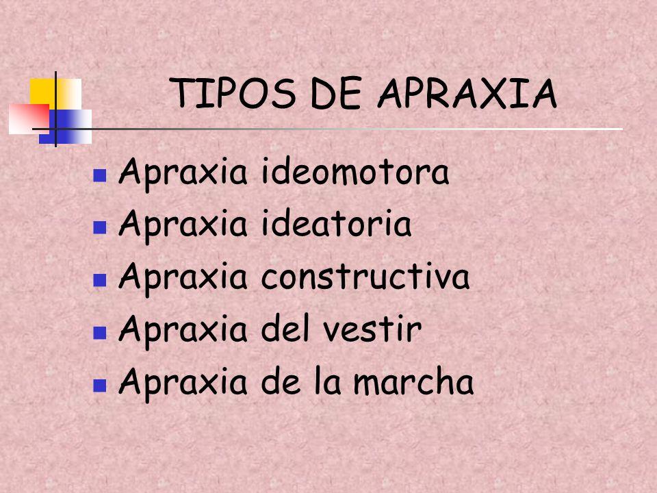 TIPOS DE APRAXIA Apraxia ideomotora Apraxia ideatoria Apraxia constructiva Apraxia del vestir Apraxia de la marcha