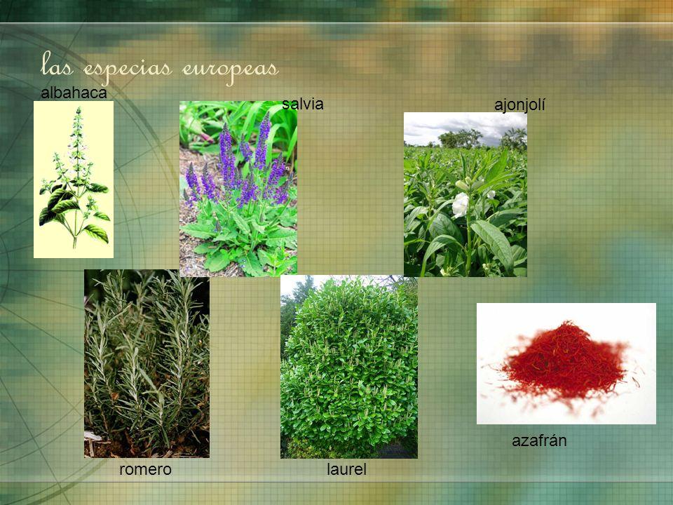 las especias europeas azafrán laurel salvia romero albahaca ajonjolí