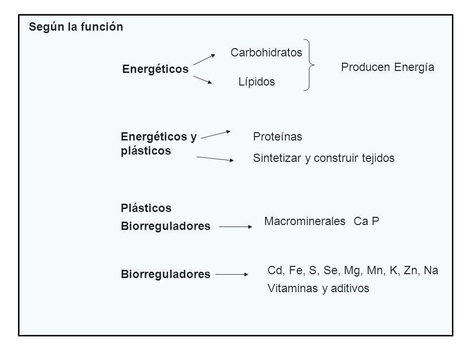 Según la función Energéticos Carbohidratos Lípidos Producen Energía Energéticos y plásticos Proteínas Sintetizar y construir tejidos Plásticos Biorreg