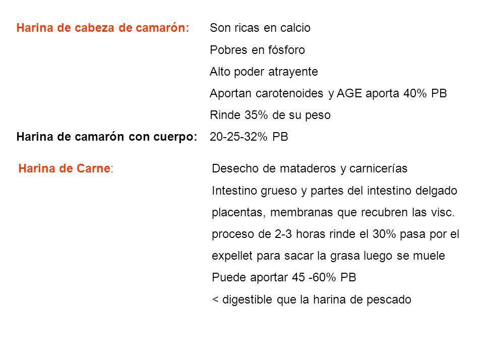 Harina de cabeza de camarón: Son ricas en calcio Pobres en fósforo Alto poder atrayente Aportan carotenoides y AGE aporta 40% PB Rinde 35% de su peso