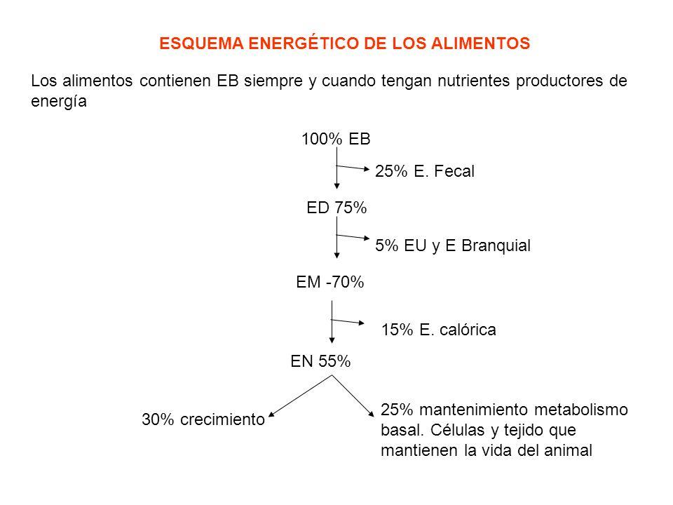 ESQUEMA ENERGÉTICO DE LOS ALIMENTOS Los alimentos contienen EB siempre y cuando tengan nutrientes productores de energía 100% EB 25% E. Fecal ED 75% 5