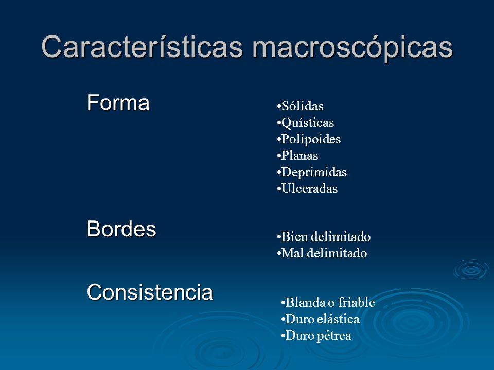 Características macroscópicas FormaBordesConsistencia Sólidas Quísticas Polipoides Planas Deprimidas Ulceradas Bien delimitado Mal delimitado Blanda o