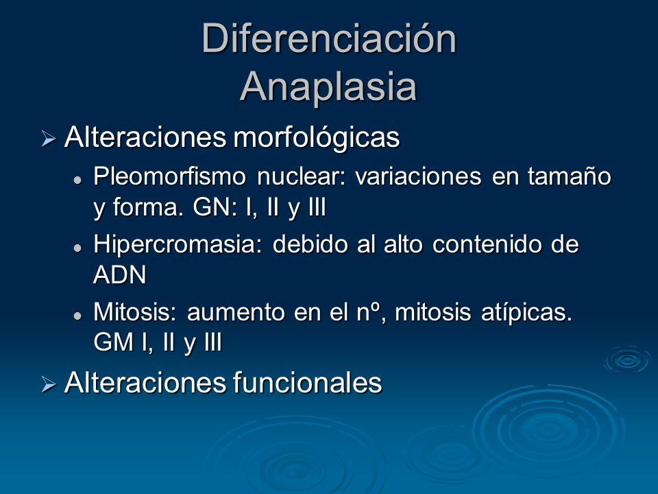 Diferenciación Anaplasia Alteraciones morfológicas Alteraciones morfológicas Pleomorfismo nuclear: variaciones en tamaño y forma. GN: I, II y III Pleo