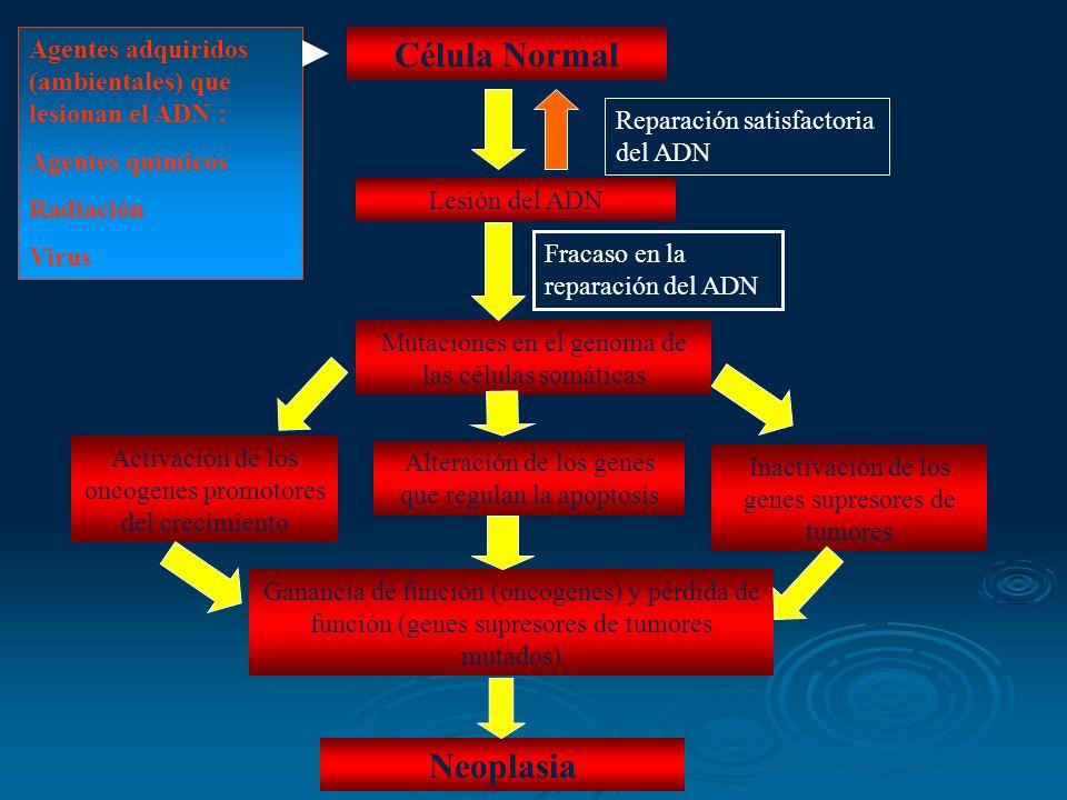 Célula Normal Lesión del ADN Mutaciones en el genoma de las células somáticas Activación de los oncogenes promotores del crecimiento Alteración de los