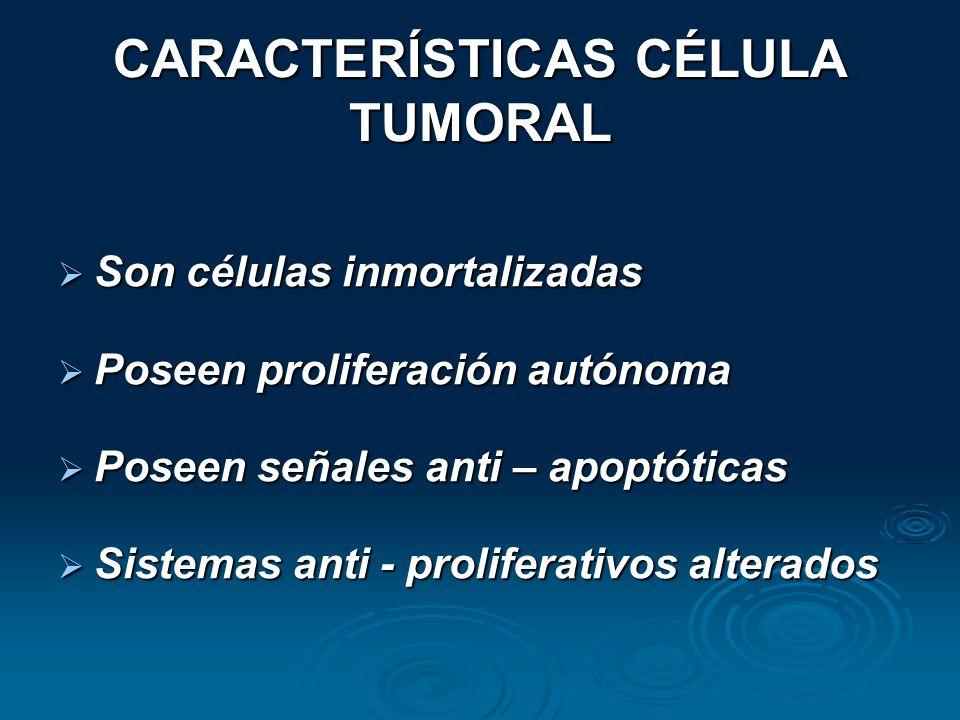 CARACTERÍSTICAS CÉLULA TUMORAL Son células inmortalizadas Son células inmortalizadas Poseen proliferación autónoma Poseen proliferación autónoma Posee