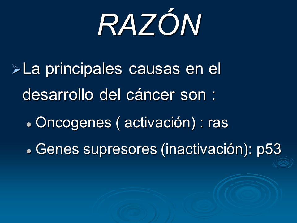 RAZÓN La principales causas en el desarrollo del cáncer son : La principales causas en el desarrollo del cáncer son : Oncogenes ( activación) : ras On