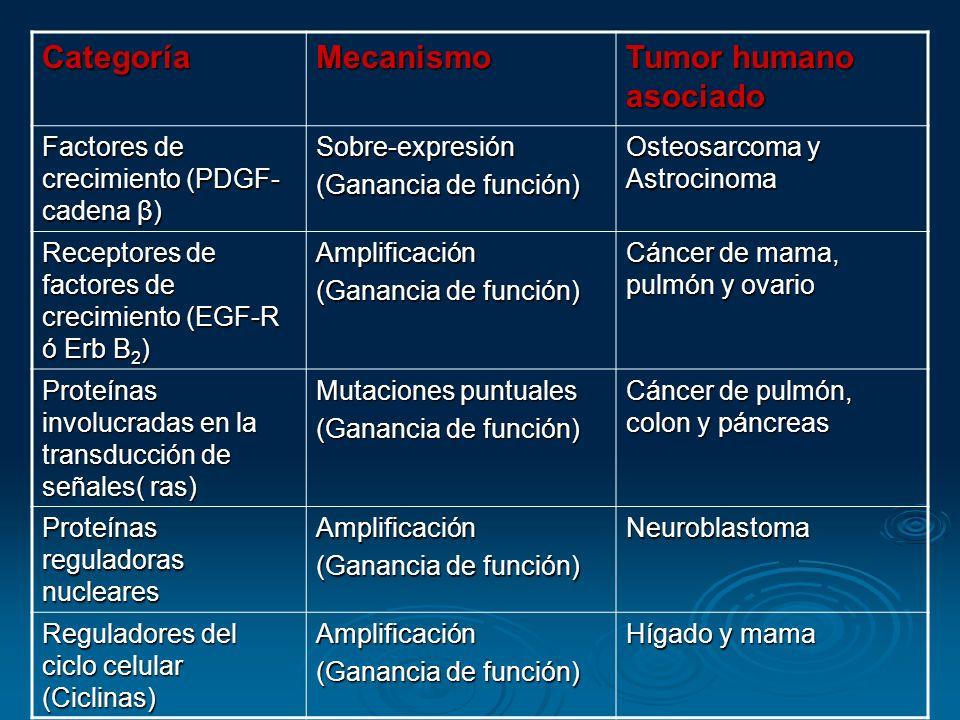 CategoríaMecanismo Tumor humano asociado Factores de crecimiento (PDGF- cadena β) Sobre-expresión (Ganancia de función) Osteosarcoma y Astrocinoma Rec