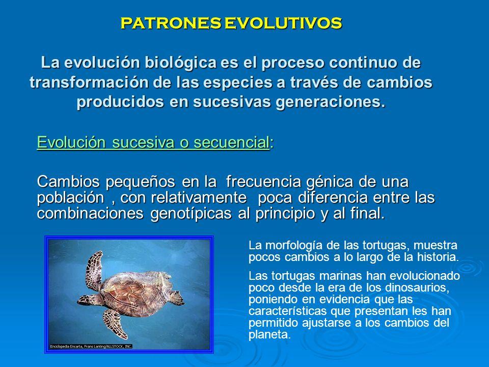 PATRONES EVOLUTIVOS La evolución biológica es el proceso continuo de transformación de las especies a través de cambios producidos en sucesivas genera
