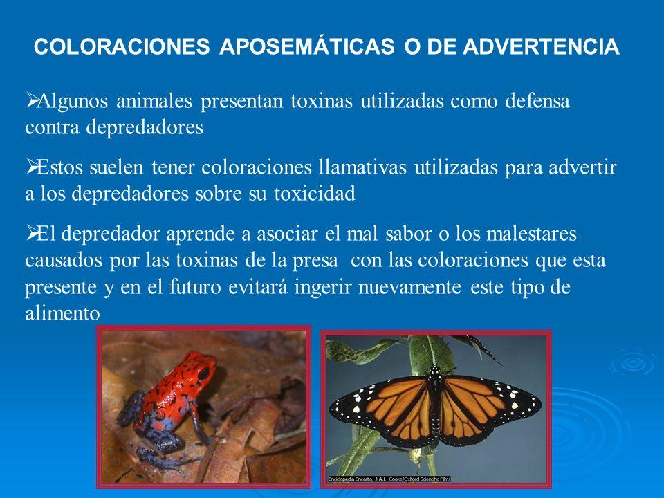 COLORACIONES APOSEMÁTICAS O DE ADVERTENCIA Algunos animales presentan toxinas utilizadas como defensa contra depredadores Estos suelen tener coloracio