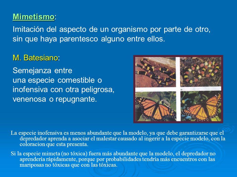 Mimetismo Mimetismo: Imitación del aspecto de un organismo por parte de otro, sin que haya parentesco alguno entre ellos. M. Batesiano M. Batesiano: S