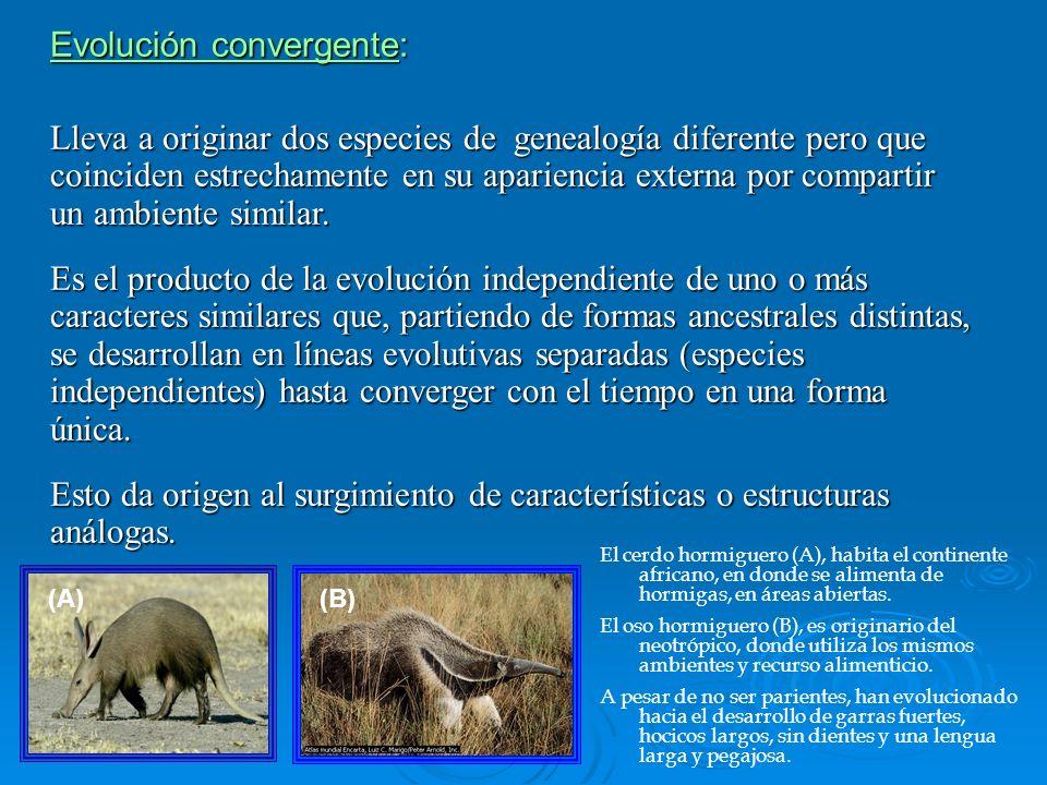 Evolución convergente: Lleva a originar dos especies de genealogía diferente pero que coinciden estrechamente en su apariencia externa por compartir u