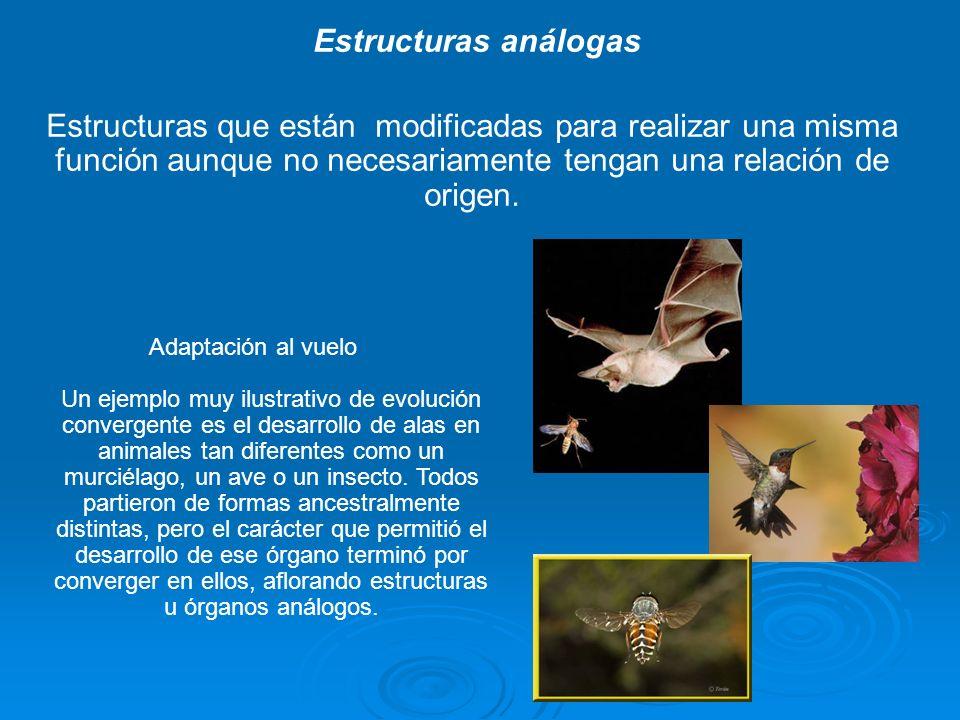 Radiación adaptativa Explosión de divergencias Explosión de divergencias Un linaje inicial da origen a muchas especies nuevas Un linaje inicial da origen a muchas especies nuevas Nuevas especies llenan hábitats nuevos o vacantes en la zona de adaptación o nuevos recursos Nuevas especies llenan hábitats nuevos o vacantes en la zona de adaptación o nuevos recursos