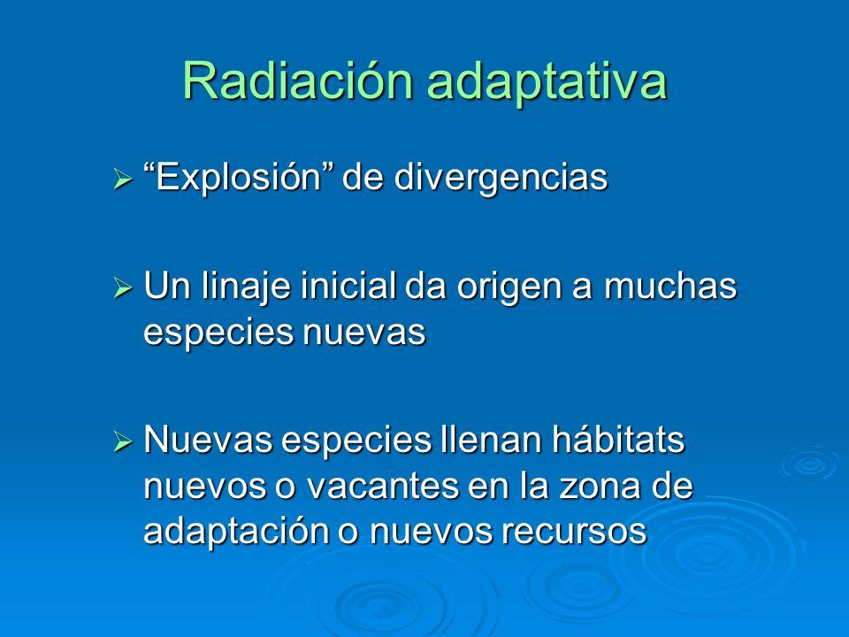 Radiación adaptativa Explosión de divergencias Explosión de divergencias Un linaje inicial da origen a muchas especies nuevas Un linaje inicial da ori