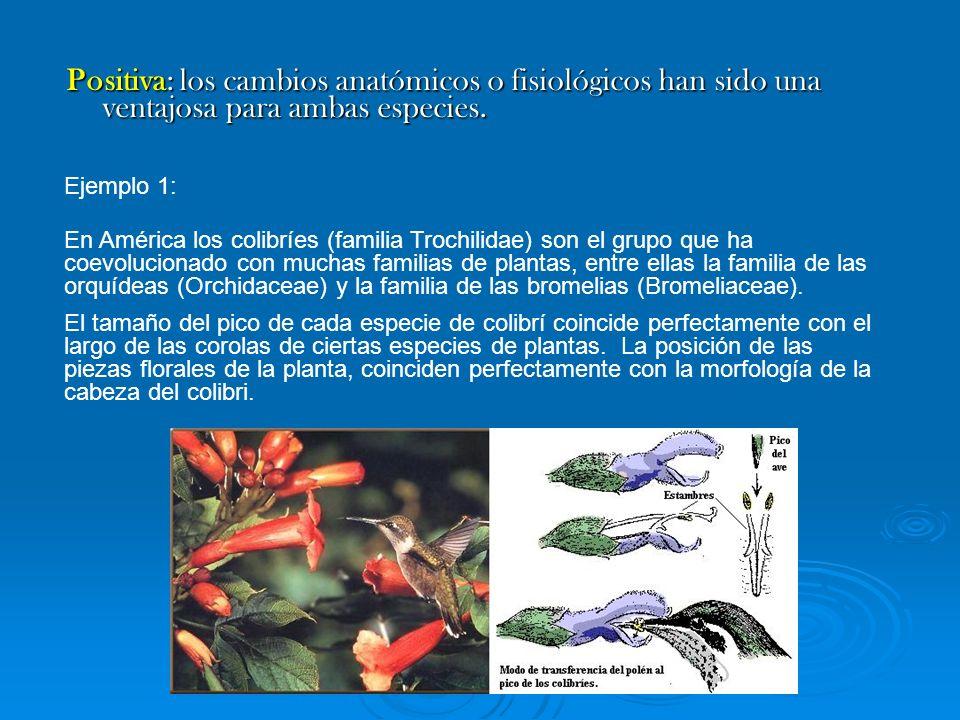 Positiva: los cambios anatómicos o fisiológicos han sido una ventajosa para ambas especies. Ejemplo 1: En América los colibríes (familia Trochilidae)