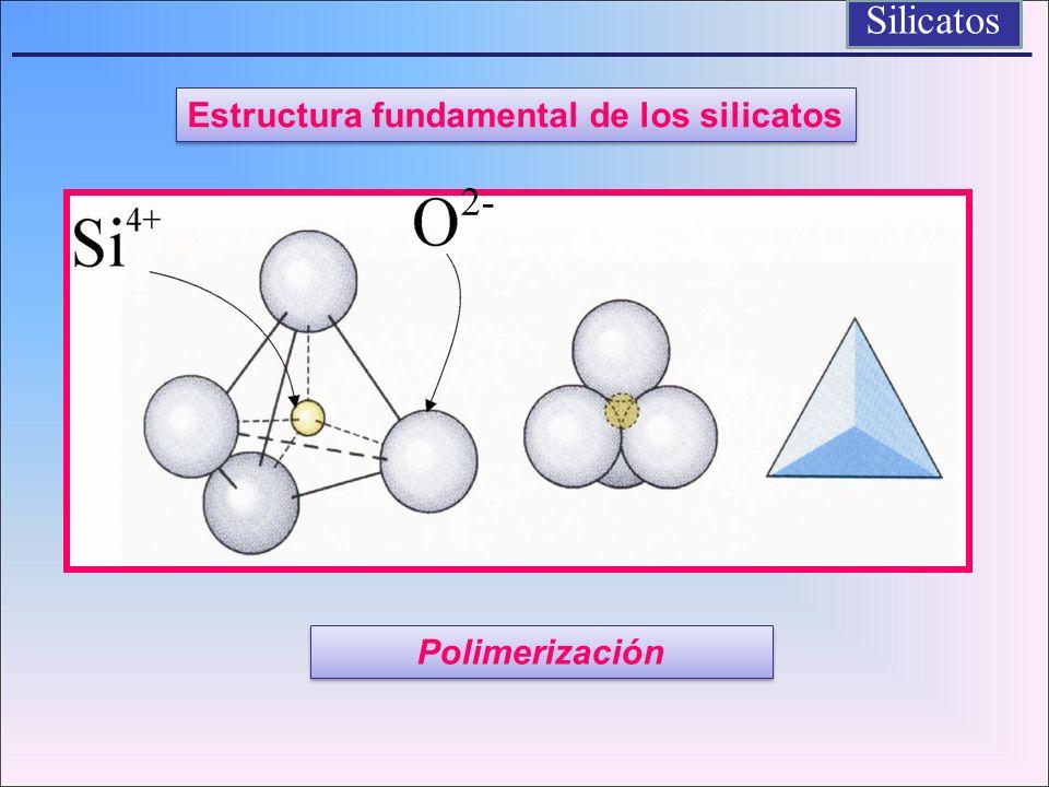 Silicatos ClaseDistribución de los tetraedros de SiO 4 Composición Unitaria Ejemplo mineral Nesosilicatos (tetraedros aislados SiO 4 ) (SiO 4 ) 4- Olivino Sorosilicatos (2 tetraedros unidos por un oxigeno, relación 7:2) (Si 2 O 7 ) 6- Epidoto Ciclosilicatos (+ de 2 tetraedros unidos por oxígenos, relación 1:3) (Si 6 O 18 ) 12- Berilo Clasificación de los Silicatos