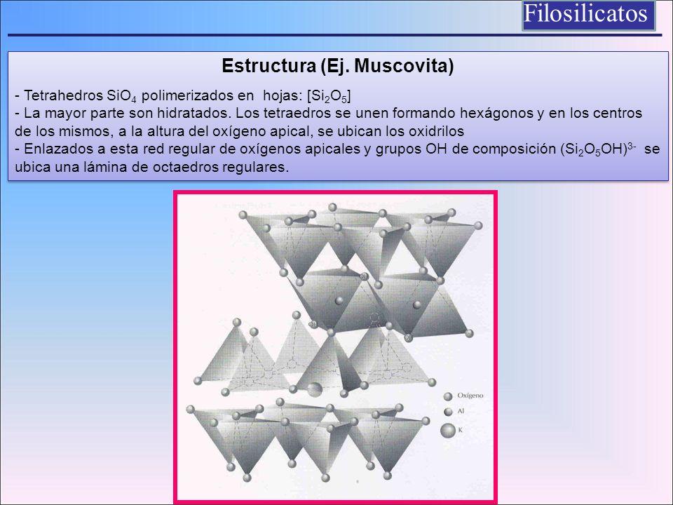 Filosilicatos Estructura (Ej. Muscovita) - Tetrahedros SiO 4 polimerizados en hojas: [Si 2 O 5 ] - La mayor parte son hidratados. Los tetraedros se un