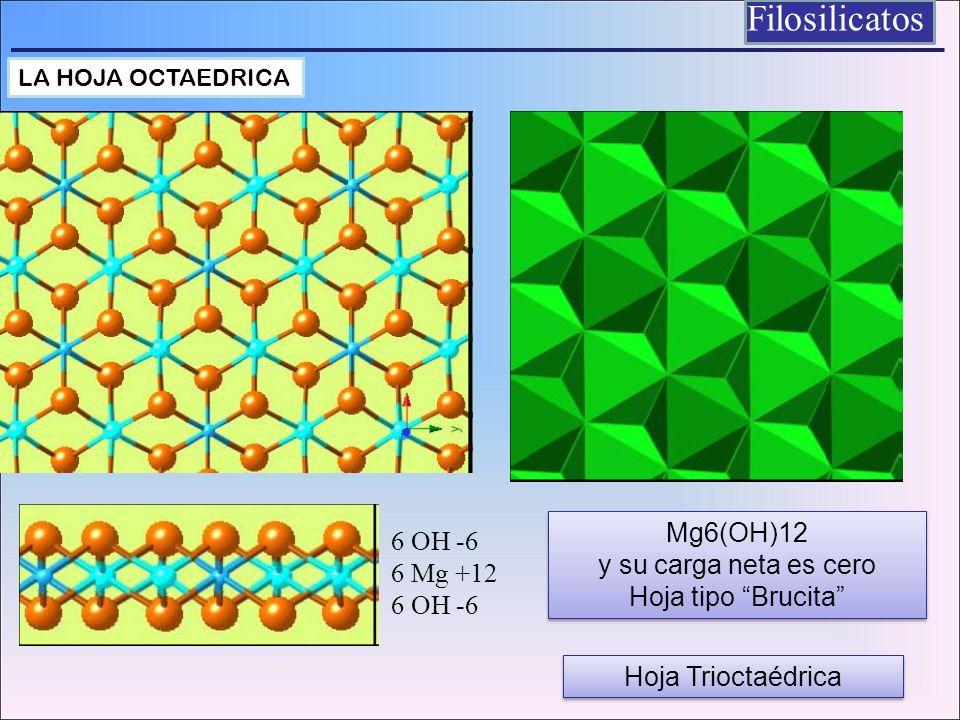 Filosilicatos 6 OH -6 6 Mg +12 6 OH -6 Mg6(OH)12 y su carga neta es cero Hoja tipo Brucita Mg6(OH)12 y su carga neta es cero Hoja tipo Brucita LA HOJA