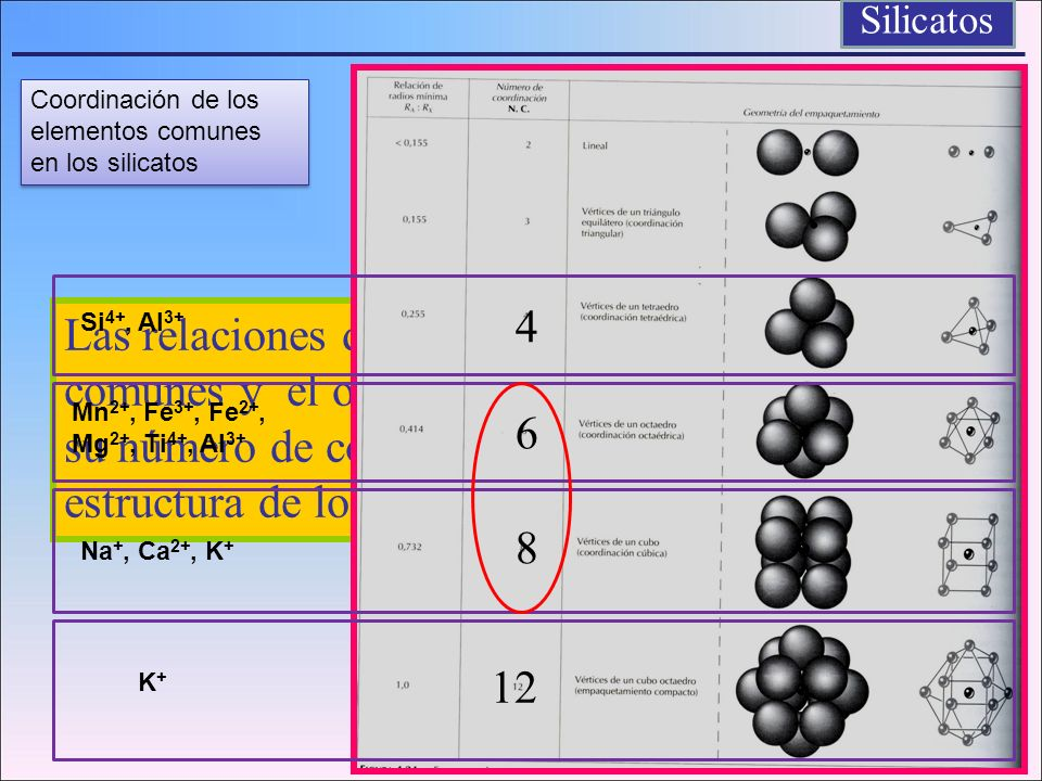 Las relaciones de radio entre los elementos comunes y el oxigeno en los silicatos determina su número de coordinación y su posición en la estructura d
