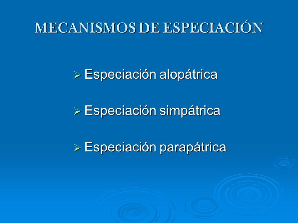 Especiación alopátrica Especiación alopátrica Especiación simpátrica Especiación simpátrica Especiación parapátrica Especiación parapátrica MECANISMOS