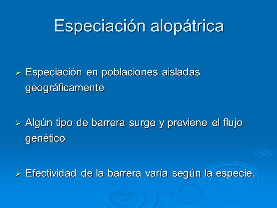 Especiación alopátrica Especiación en poblaciones aisladas geográficamente Especiación en poblaciones aisladas geográficamente Algún tipo de barrera s