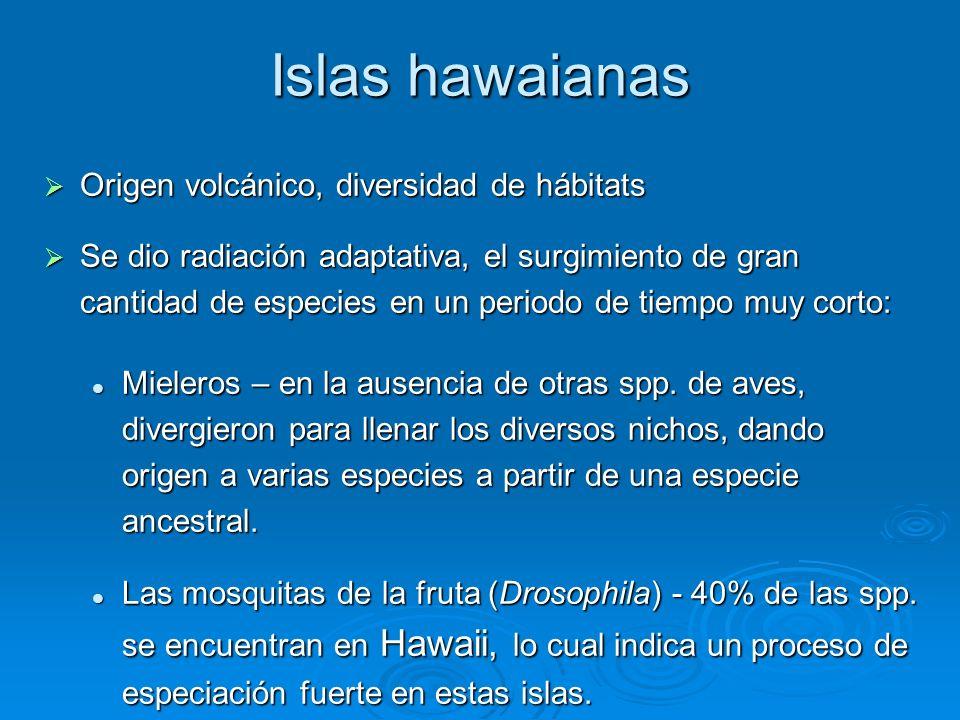 Islas hawaianas Origen volcánico, diversidad de hábitats Origen volcánico, diversidad de hábitats Se dio radiación adaptativa, el surgimiento de gran