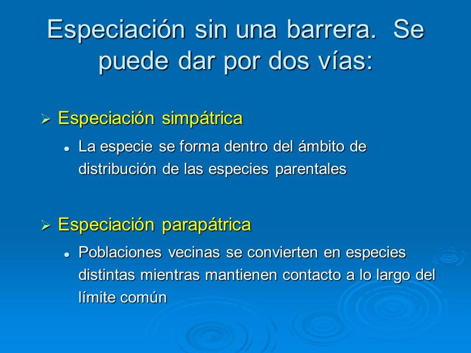 Especiación sin una barrera. Se puede dar por dos vías: Especiación simpátrica Especiación simpátrica La especie se forma dentro del ámbito de distrib