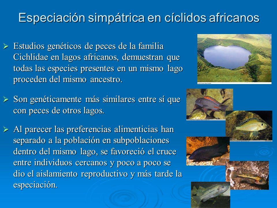 Especiación simpátrica en cíclidos africanos Estudios genéticos de peces de la familia Cichlidae en lagos africanos, demuestran que todas las especies