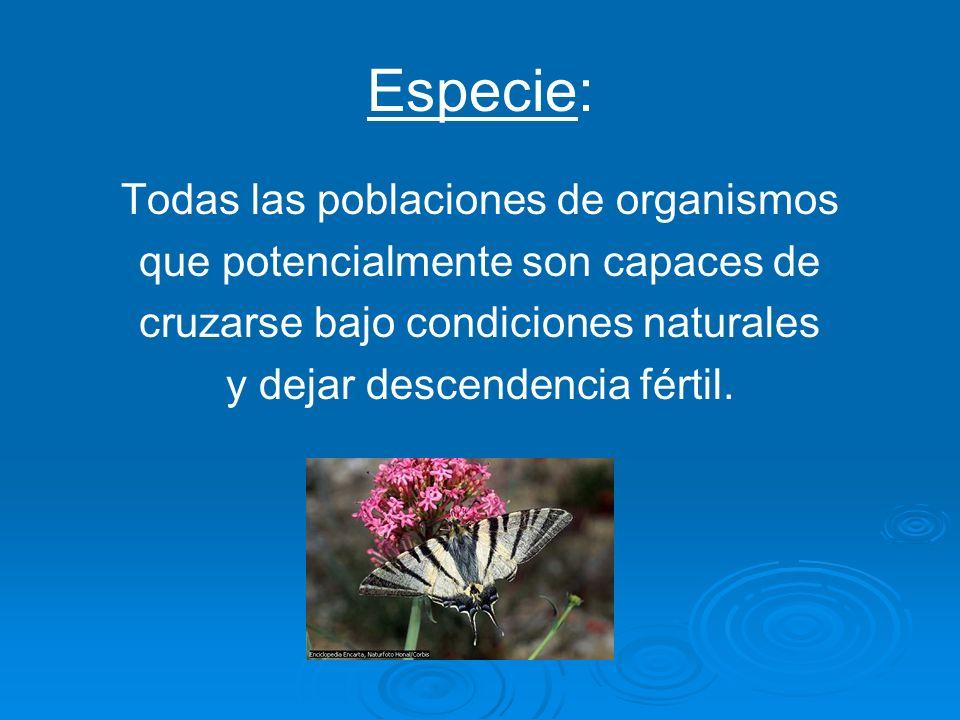 Especie: Todas las poblaciones de organismos que potencialmente son capaces de cruzarse bajo condiciones naturales y dejar descendencia fértil.