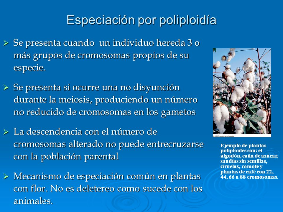 Especiación por poliploidía Se presenta cuando un individuo hereda 3 o más grupos de cromosomas propios de su especie. Se presenta cuando un individuo