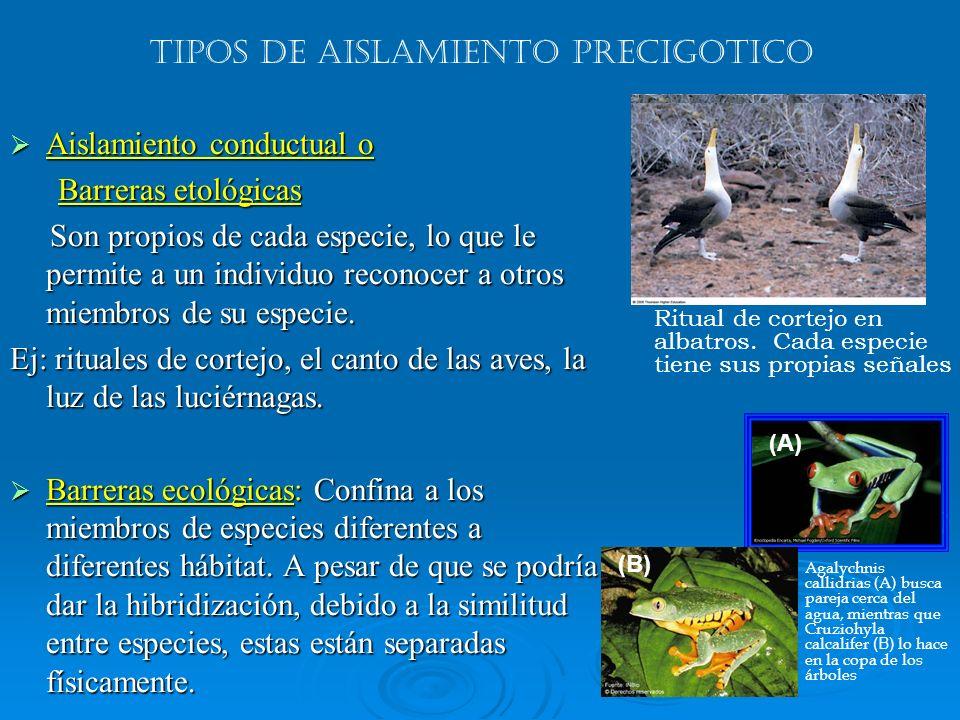 Aislamiento conductual o Aislamiento conductual o Barreras etológicas Barreras etológicas Son propios de cada especie, lo que le permite a un individu