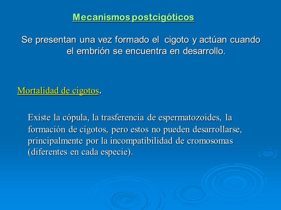 Mecanismos postcigóticos Se presentan una vez formado el cigoto y actúan cuando el embrión se encuentra en desarrollo. Mortalidad de cigotos. Existe l