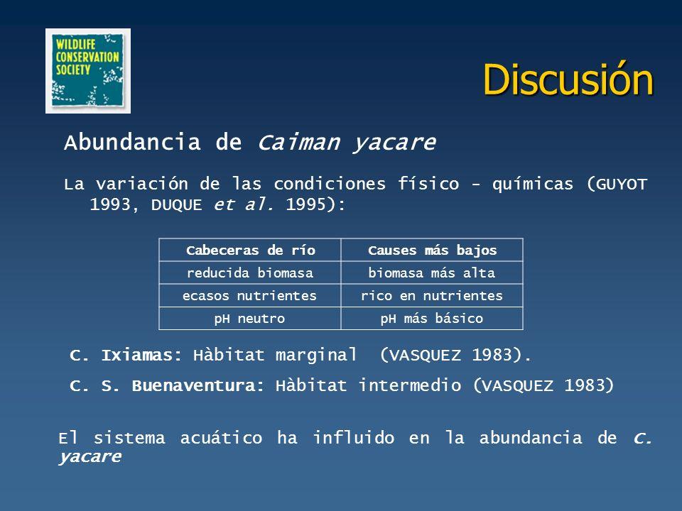 Discusión Abundancia de Caiman yacare La variación de las condiciones físico - químicas (GUYOT 1993, DUQUE et al. 1995): Cabeceras de ríoCauses más ba