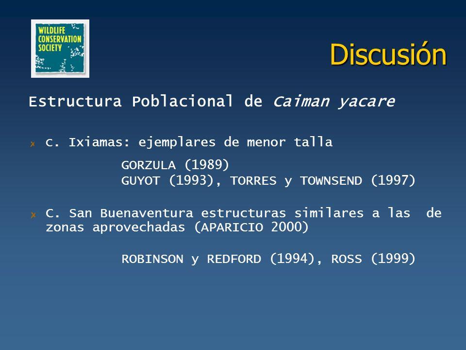 Discusión Estructura Poblacional de Caiman yacare C. Ixiamas: ejemplares de menor talla GORZULA (1989) GUYOT (1993), TORRES y TOWNSEND (1997) C. San B