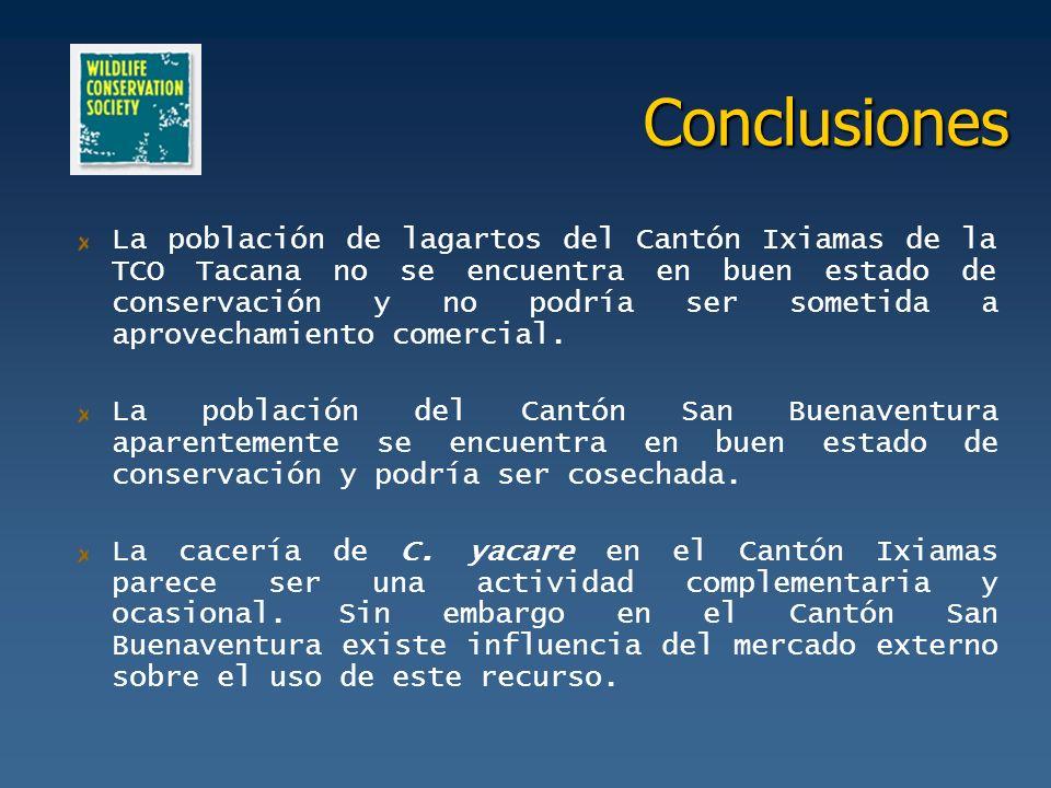 Conclusiones La población de lagartos del Cantón Ixiamas de la TCO Tacana no se encuentra en buen estado de conservación y no podría ser sometida a ap
