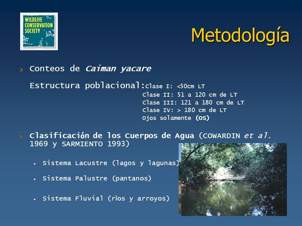 Metodología Conteos de Caiman yacare Estructura poblacional: Clase I: <50cm LT Clase II: 51 a 120 cm de LT Clase III: 121 a 180 cm de LT Clase IV: > 1