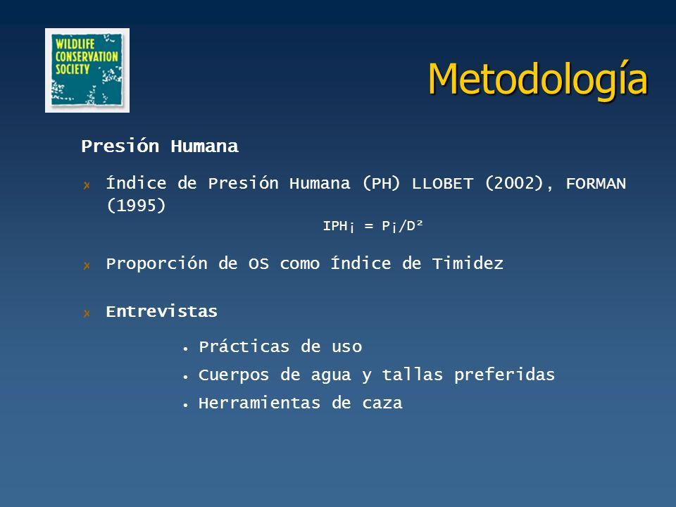 Metodología Presión Humana Índice de Presión Humana (PH) LLOBET (2002), FORMAN (1995) IPH¡ = P¡/D² Proporción de OS como Índice de Timidez Entrevistas