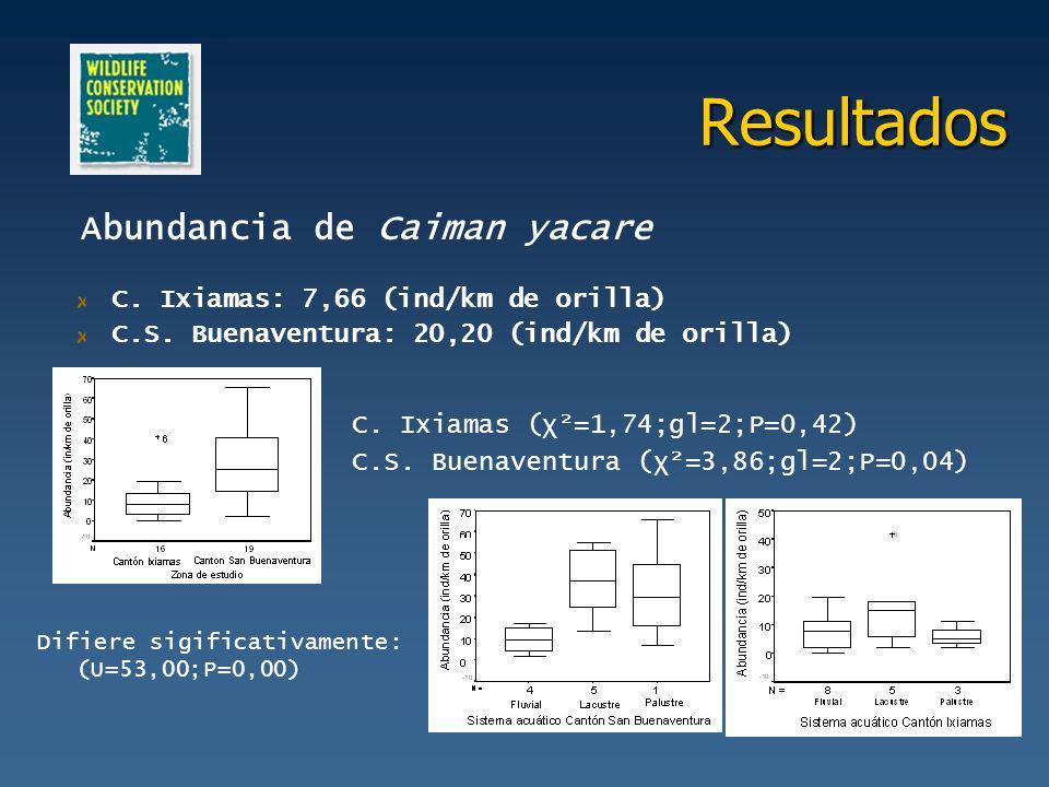 Resultados C. Ixiamas: 7,66 (ind/km de orilla) C.S. Buenaventura: 20,20 (ind/km de orilla) Difiere sigificativamente: (U=53,00;P=0,00) Abundancia de C