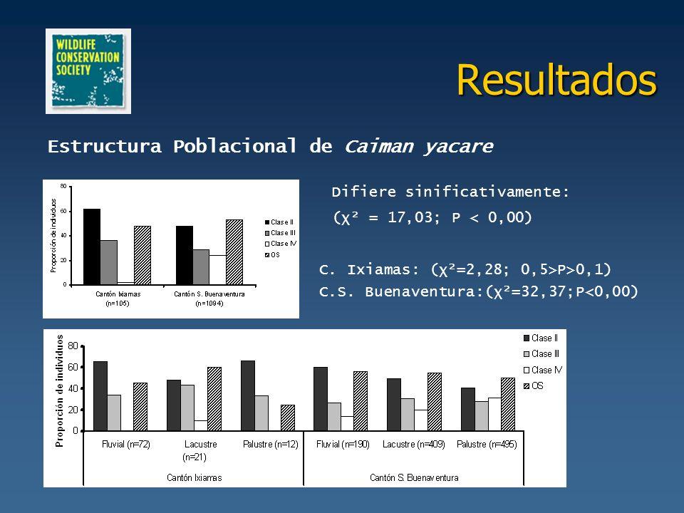 Resultados Estructura Poblacional de Caiman yacare Difiere sinificativamente: (χ² = 17,03; P < 0,00) C. Ixiamas: (χ²=2,28; 0,5>P>0,1) C.S. Buenaventur