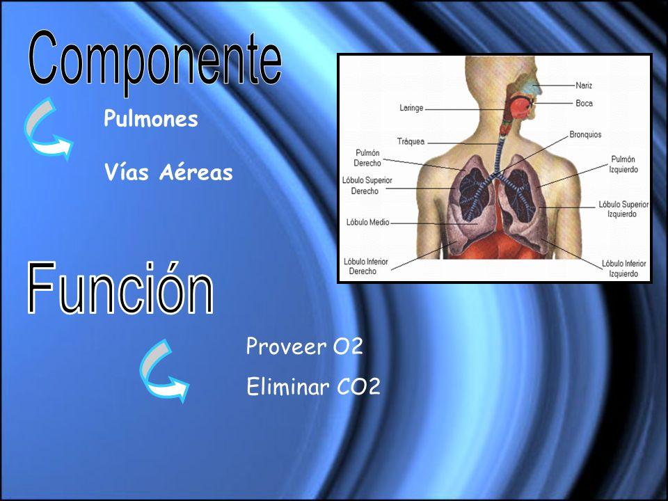 Pulmones Vías Aéreas Proveer O2 Eliminar CO2