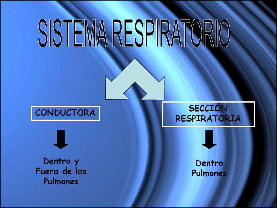 CONDUCTORA SECCIÓN RESPIRATORIA Dentro y Fuera de los Pulmones Dentro Pulmones