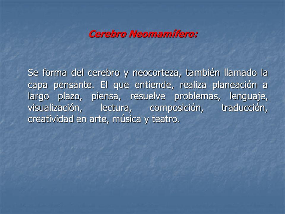 Cerebro Neomamífero: Se forma del cerebro y neocorteza, también llamado la capa pensante. El que entiende, realiza planeación a largo plazo, piensa, r
