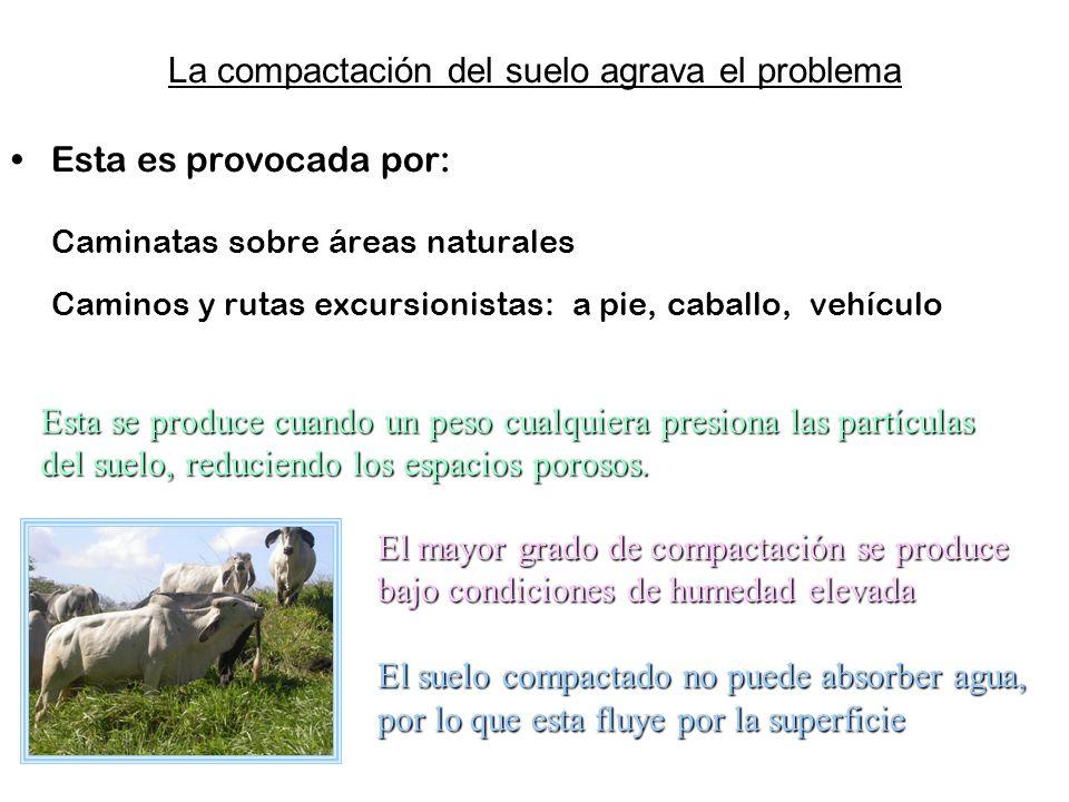 La compactación del suelo agrava el problema Esta es provocada por: Caminatas sobre áreas naturales Caminos y rutas excursionistas: a pie, caballo, ve