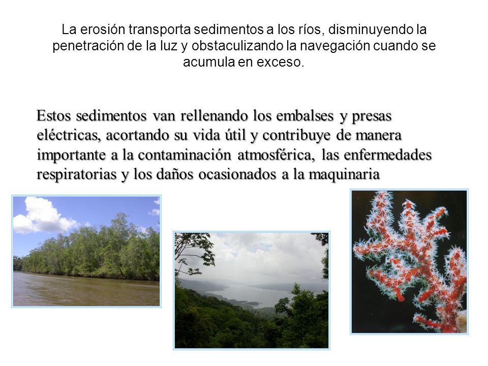 La erosión transporta sedimentos a los ríos, disminuyendo la penetración de la luz y obstaculizando la navegación cuando se acumula en exceso. Estos s
