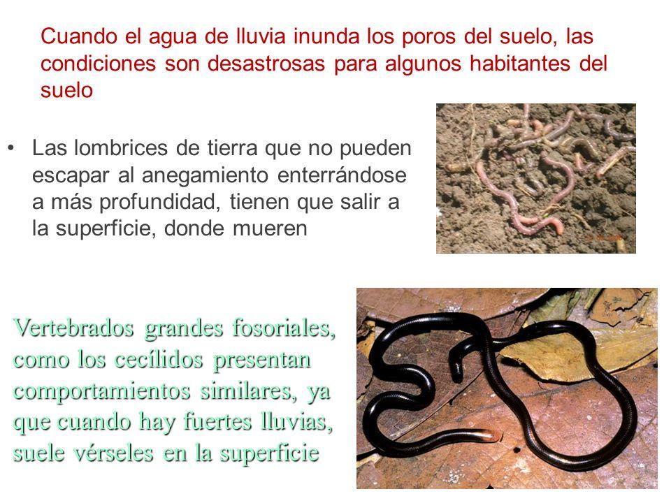La diversidad de organismos de este hábitat es enorme: Bacterias Bacterias Hongos Hongos Protistas Protistas Representantes de casi todos los tipos de invertebrados Representantes de casi todos los tipos de invertebrados Vertebrados fosoriales Vertebrados fosoriales