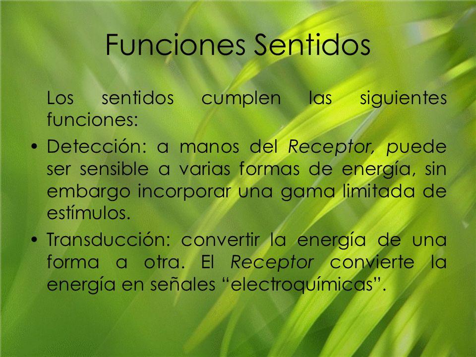 Funciones Sentidos Los sentidos cumplen las siguientes funciones: Detección: a manos del Receptor, puede ser sensible a varias formas de energía, sin
