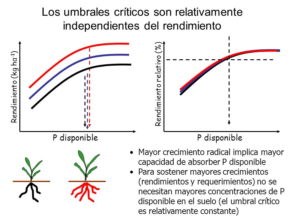 P disponible Rendimiento (kg ha -1 ) Rendimiento relativo (%) P disponible Mayor crecimiento radical implica mayor capacidad de absorber P disponible