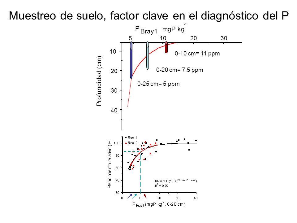 40 30 20 10 P Bray1 mgP kg 5102030 Profundidad (cm) 0-10 cm= 11 ppm 0-20 cm= 7.5 ppm 0-25 cm= 5 ppm Muestreo de suelo, factor clave en el diagnóstico
