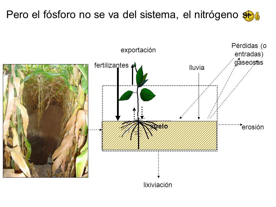 suelo exportación fertilizantes.............. Pero el fósforo no se va del sistema, el nitrógeno si lluvia erosión lixiviación Pérdidas (o entradas) g