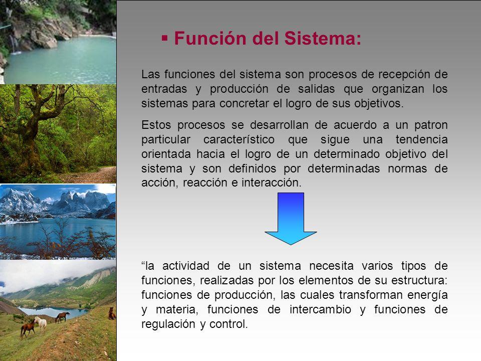 Función del Sistema: Las funciones del sistema son procesos de recepción de entradas y producción de salidas que organizan los sistemas para concretar el logro de sus objetivos.